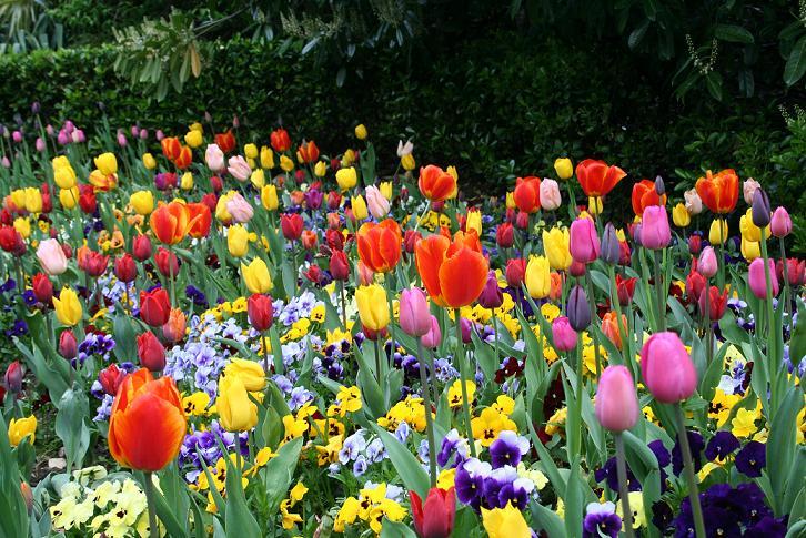 flores no jardim letra:El Jardin De Las Flores